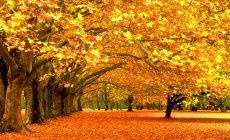 Fall Leaves Wallpaper Hd Trees