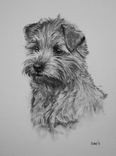 Norfolk Terrier dog fine art Limited Edition print by Terrierzs