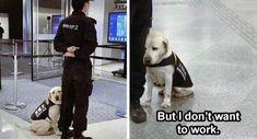 Top 34 Funny Animal Memes Of The Day Funny Animal Memes, Funny Animals, Memes Of The Day, Instagram, Dogs, Dog, Pet Dogs, Funny Animal, Doggies