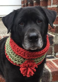 bufanda para perro red dog cowl red infinity dog scarf with ; hundeschal red dog cowl red infinity hundeschal with Crochet Dog Clothes, Crochet Dog Sweater, Pet Clothes, Crochet Hats, Crochet For Dogs, Dress Clothes, Fashion Clothes, Crochet Dog Patterns, Cute Dogs Breeds