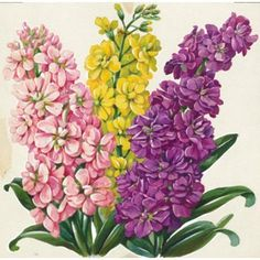 Check out this item at One Kings Lane! Rainbow Hyacinth Watercolor, C. 1935