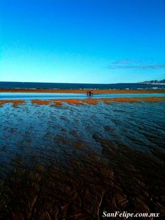 Tide's out on the San Felipe Beach... #Baja