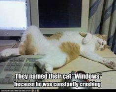 Windows (the cat) keeps crashing