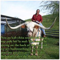 Haitian Proverb: Nou pa kab chita sou do bèf la epi nap pale bèf la mal: We cannot be sitting on the back of the cow and we are badmouthing it. Nous ne pouvons pas être assis sur le dos du boeuf et dire du mal de lui