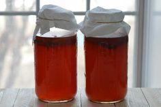 homemade kombucha fermenting