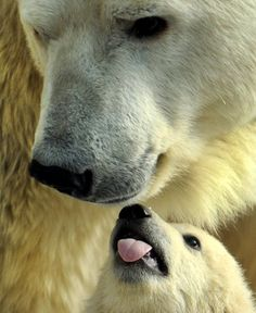 A mother polar bear plays with one of her three cubs born in November at the Moscow Zoo. Andrey Smirnov / AFP/Getty Images
