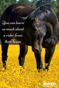 Horse photography - In the meadow. All The Pretty Horses, Beautiful Horses, Animals Beautiful, Horse Photos, Horse Pictures, Animals And Pets, Cute Animals, Inspirational Horse Quotes, Equestrian Quotes