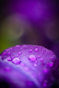 purple by XIIMTX  on 500px