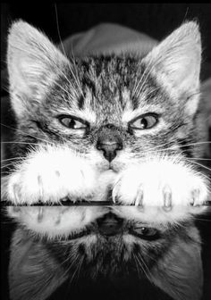 These feet are coming after you . with the rest of me very close behind them! Animals And Pets, Baby Animals, Cute Animals, Crazy Cat Lady, Crazy Cats, Beautiful Cats, Animals Beautiful, Image Chat, Cute Kittens