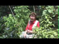 How to Grow Peppers by Pat Welsh | YouTube. Note: Best daytime temp to set fruit is between 65'F - 75'F. If >90'F, blossoms may fall off. Tomato and Blossom Set Spray may help. (In hot climates, peppers may not be an ideal summer planting but early spring planting!) Recommends 1) granulated fertilizer as part of pre-planting soil amendment plus 2) liquid fertilizer applied  2) liquid fertilizer applied throughout plants' growth.