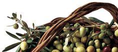 Olive Fruit, Plants, Food, Eten, Planters, Meals, Plant, Planting, Diet