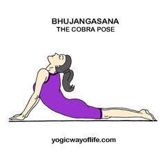 chakrasana wheel pose  yoga asana for fitness of back