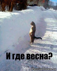 Боюсь, что я сейчас очень напоминаю этого кота.