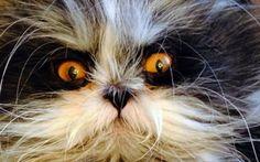 Après Grumpy Cat, dites bonjour à Atchoum, le Creepy Cat.