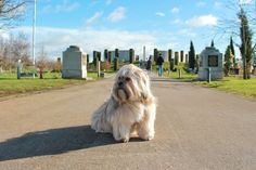 Paws for Remembrance | National Memorial Arboretum - Paws across Britain