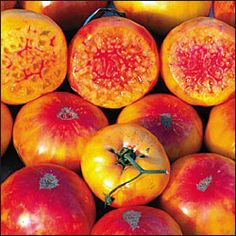 Hillbilly Tomatoes - Seeds from Terra Edibles - Late. A huge bi-colour (bright yellow with red marbling) potato-leaf tomato, good slicer. Rich sweet flavour. Said to originate from West Virginia.