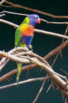 Bird Watching Caribbean Spots. See some exciting spots in the different Caribbean vacation islands for bird watching