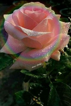 Arrange a Flower Garden - The health and vitality of a garden with flowers and plants may depend on several factors besides the precise amounts . Beautiful Rose Flowers, Love Rose, Flowers Nature, Exotic Flowers, Amazing Flowers, My Flower, Beautiful Flowers, Cactus Flower, Beautiful Pictures