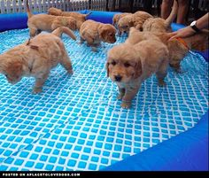 Puppy Pool Party • dog dogs puppy puppies cute doggy doggies adorable funny fun silly photography