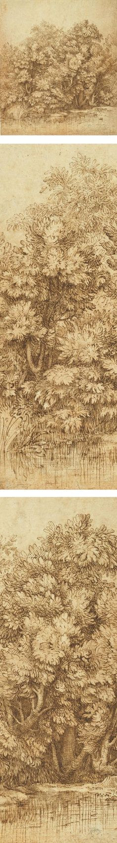 Titian pen drawing, Trees Near a Pool of Water || Lines and Colors