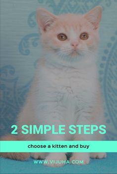 Британские короткошерстные котята редких окрасов vijuha.com