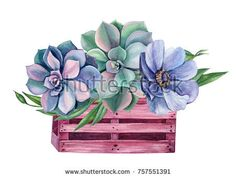 Watercolor green colorful succulents and flowers rose, blue anemone, floral compositions, hand drawing.