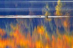 Loons on Tapestry Photo by Patricia Przybylinski — National Geographic Your Shot