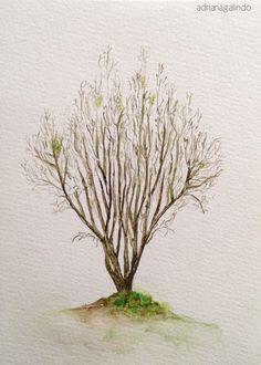 40 trees project #7  Arvore / Tree 7,  aquarela / watercolor 21 x 15 cm drigalindo1@gmail.com Adriana Galindo