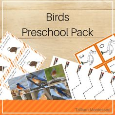 Montessori Resources for Learning About Birds - Trillium Montessori Spring Activities, Hands On Activities, Nature Activities, Sequencing Cards, Common Birds, Animal Alphabet, Montessori Activities, Hand Illustration, Toddler Preschool