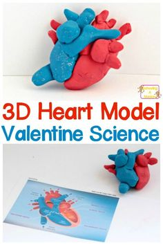 17 Best Heart project images in 2017 | School, Science fair