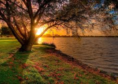 Lake Monger, Perth, Western Australia. Beautiful. One day I will see in person
