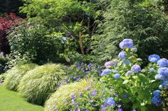 Blue hydrangea and japanese forest grass combination