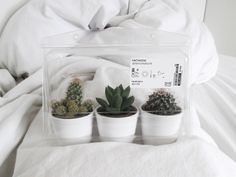 I want all the cactus in the world // creative hipsters photography inspiration for Instagram, tumblr worthy and blog