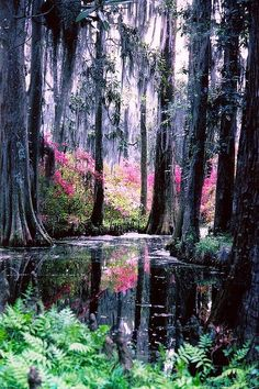 """Cypress Gardens 1978"" By snow41 I scanned this from an old photo. Been saving it for spring. Charleston is in all its glory now. We are fast moving to peak here in upper SC"