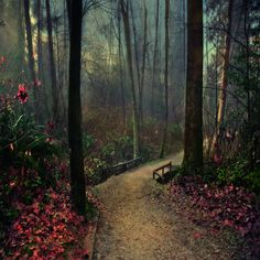 Whispering Forest by Violet Kleinert    Port Moody, BC, Canada