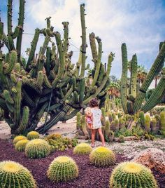 'Cactus paradise' by photographer Mercedes Noriega (@noriegamechi) taken at Mossèn Costa i Llobera Gardens in #Barcelona. To submit your images for consideration on our feed follow @childhoodeveryday and tag your photos #childhoodeveryday. // #portraits #documentaryphotography #familydocumentary #documentary #portrait #portaitphotography