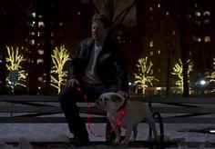 Cachorro de perro de rastreo Iluminado Correa 'se puede ver desde arriba a un cuarto de milla en la oscuridad. Está hecho de nylon reforzado, por lo que es fuerte y ligero '. Haga clic aquí para comprar.