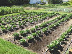 Drip Irrigation Water Your Garden Efficiently Drip irrigation