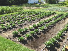 Garden Irrigation Ideas a garden irrigation system and planting grid in one the garden grid by A Step By Step Guide To Installing A Drip Irrigation System Just In