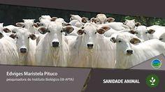 🔴 Notícias Agrícolas está ao vivo: AO VIVO: SANIDADE ANIMAL