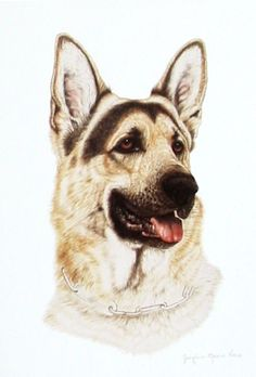 This German Shepherd is a Guide Dog. Animal art is always in vogue. Animal Paintings have always been popular. Nature art and Nature paintings have also been well appreciated.