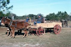 Stone, Robert L., 1944-. Raymond Richardson, apprentice of wheelwright and coach maker John Luther, and his team of mules- McAlpin, Florida. Not after 1992. Color slide. State Archives of Florida, Florida Memory. Accessed 24 Mar. 2016.<https://www.floridamemory.com/items/show/107280>. Courtesy: State Archives of Florida, Tallahassee, FL (USA)