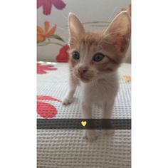 #cute#kitten#blondie