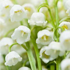 fiori e profumi vademecum per sceglierli e regalarli - Gioia!