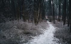 Forest of Ice