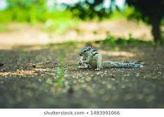 Stock Photo and Image Portfolio by ZAPPL | Shutterstock Royalty Free Images, Royalty Free Stock Photos, Stock Footage, Photo Editing, National Parks, Landscape, Illustration, Animals, Animales