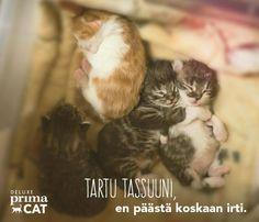 Pieni tassu jättää suuren jäljen sydämeesi. Löytyisikö sinun luoltasi rakastava koti kodittomalle kissalle?