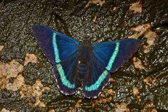 Butterfly Flowers, Beautiful Butterflies, Moth, Creatures, Friends, Garden, Nature, Animals, Butterflies