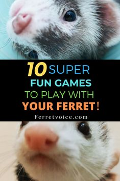 10 Super Fun Games To Play With Your Ferret!Ten FERRET GAMES you need to know.The ferrets are fond of making game challenges,which becomes more interactive. Ferrets Care, Funny Ferrets, Ferret Toys, Pet Ferret, Ferret Colors, Happy Animals, Cute Animals, Super Fun Games, Otters Cute