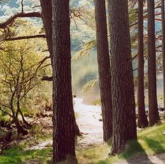 The beautiful Glendalough, Ireland by Shutterlust Tree Study, Indie Brands, The Originals, Purple, World, Awesome, Green, Ireland, Plants